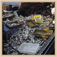 Island Vis - Fish-market